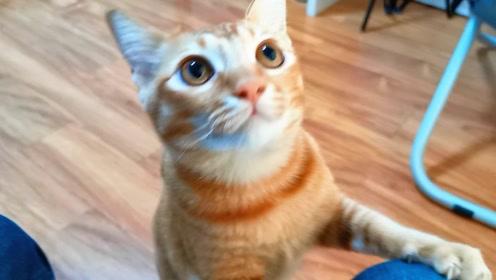 吸吸:橘猫以为要开饭了,连忙跑过来讨吃的,却被主人摆了一道,好惨一猫