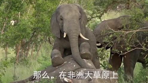 大象死后,除了尸体会爆炸之外,还隐藏着这些危险,难怪不能靠近