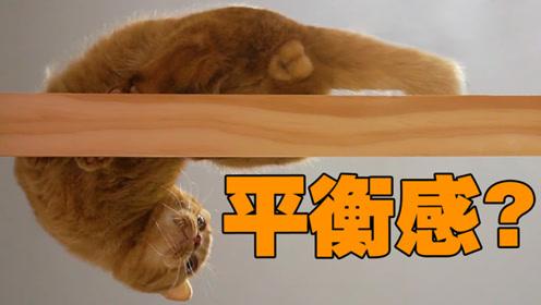 让猫走平衡木,直接给我笑傻了!