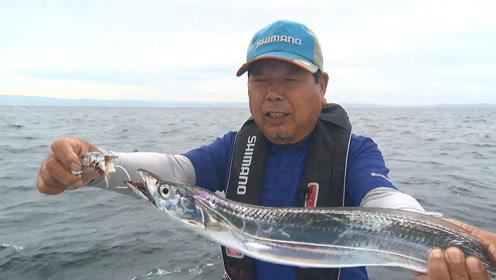 这才是带鱼本来的样子,看来以前见过的都是假的!