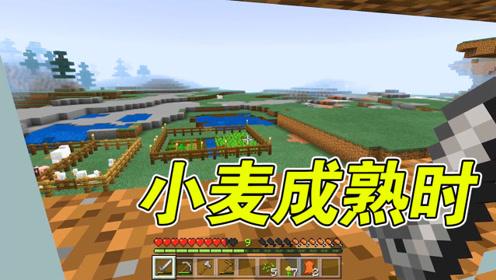 我的世界:农场大扩建,全部种上小麦,不愁饿肚子了!