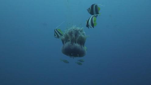 """水母连""""脑子""""都没有,为啥却可以称霸海洋?它到底是怎么做到的"""