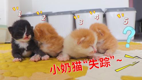 出生7天的小奶猫不见了?发现真相后,铲屎官乐坏了