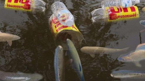 老渔民用杠杆原理捕鱼,他用这招捕鱼收入供养5口之家,人称鱼王