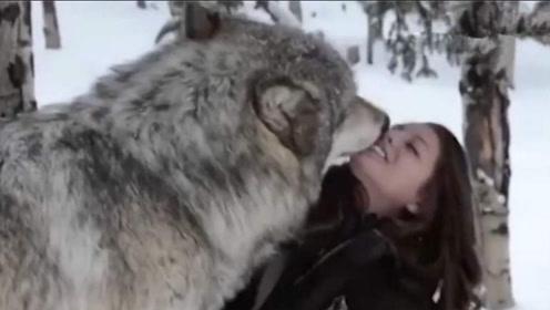 美女胆子太大了,跟野狼要亲亲,野狼:母老虎我也不敢惹