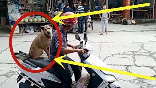 这宝座可真不赖!铲屎官带狗子上街购物,眼前一幕惊呆路人!