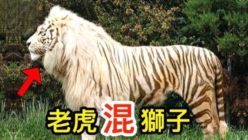 10个最神奇的动物杂交品种