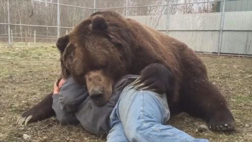 男子躺在棕熊怀里睡觉,不料棕熊突然咬向脖子!镜头拍下全过程