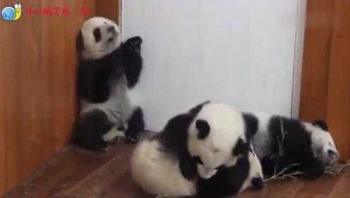 熊猫:躺在树上悠哉乐哉,小脚脚动起来的样子,也太萌了吧!