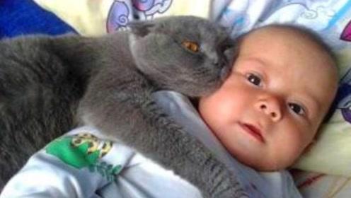 爸爸让猫咪哄宝宝睡觉,接下来请注意小猫的举动,看一次笑一次