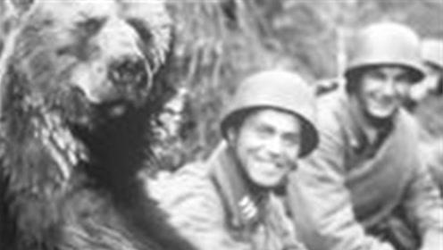 史上唯一当过兵的熊,有军衔有编制有工资,抽烟喝酒任务是运炮弹