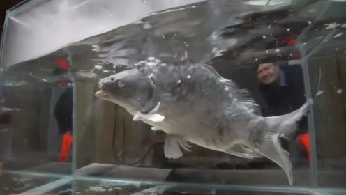 零下196度的液氮究竟有多可怕?看这条鱼的下场,我相信你秒懂!