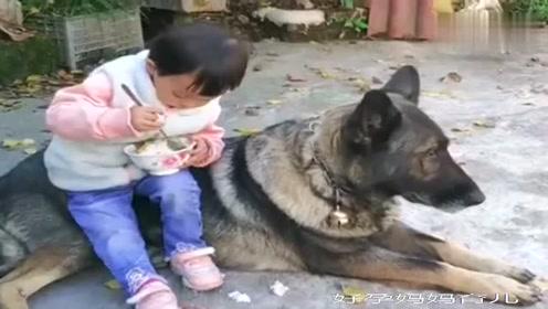 女儿在奶奶家呆了一年,没想到和家里的狗狗相处的这么好!