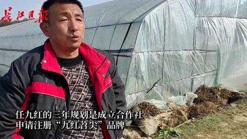 江夏残疾农民任九红种苕尖致富,一天卖出4000斤