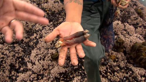 世界上最贵的海鲜,猎手用生命捕捞,堪称来自地狱的海鲜!