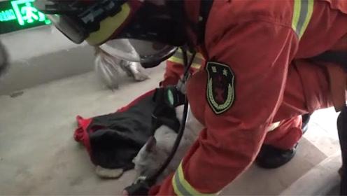 超暖!宠物犬大火中被熏晕,消防员用自己呼吸器为其供氧救醒