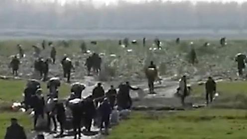 农民200亩萝卜被误传免费遭近千人哄抢 民警到场驱离