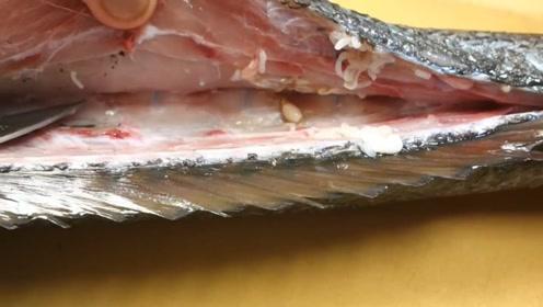 日本厨师现场拆解大鱼,鱼肉里居然发现寄生虫,还能吃吗?