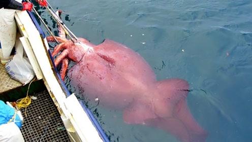 为什么鱿鱼看到人类落水,会拼命把人拖向深海?看完涨知识了!