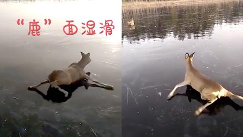 """慌不择路""""鹿""""!2只小鹿被困湖中冰面,上演""""蛙泳""""一幕"""