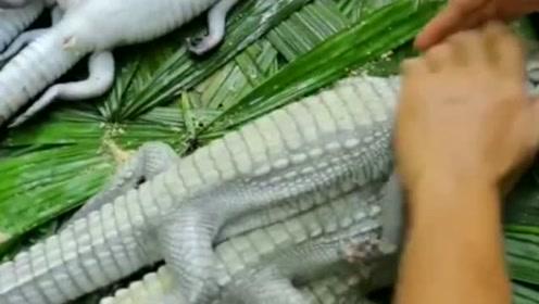 东南亚的鳄鱼没尊严,再怎么吃下去都成频危物种了