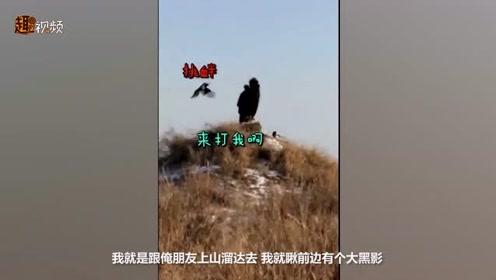 复仇小能手!男子拍下喜鹊追击大雕视频 近百只喜鹊从南追到北