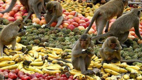 国外奇葩猴子节,居民用2吨水果请猴子吃大餐,猴子数量成千上万