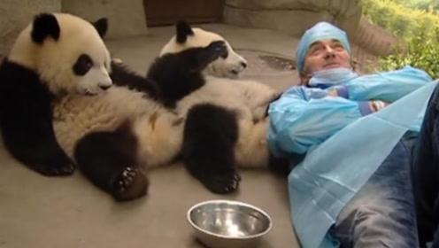 老外把熊猫当枕头,不料被一巴掌打在脸上,接下来憋住别笑