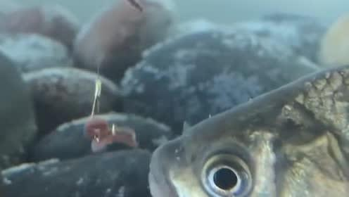 钓鱼:面对这样的鱼情,你会怎么办?网友:收竿回家吧!