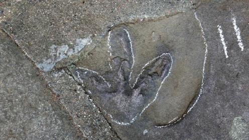 """官宣啦!承德避暑山庄发现大量恐龙足迹 这里原来是""""侏罗纪公园"""""""