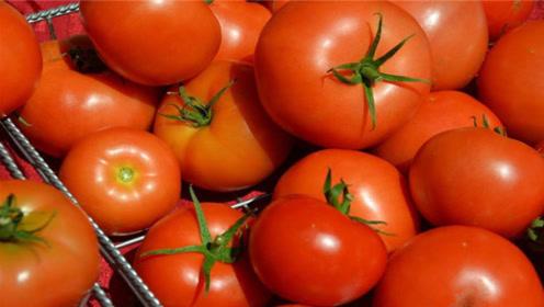你家还买反季西红柿吗?幸好今天明白了,抓紧提醒家人,切记别不当回事