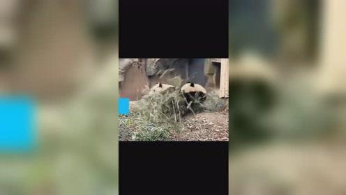 12月09日下午绵阳发生4.6级地震,地震瞬间正悠闲吃竹...
