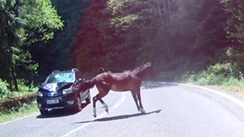 当宝马撞到真马,会发生什么样的事故?看看这辆车就明白了!