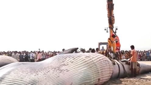 印度惊现10米鲸鱼尸体,村民纷纷上前围观,得知真相太心酸了!