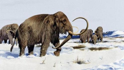 都是远古巨兽,当猛犸象和恐龙相遇,谁才是最强王者?