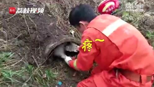 消防员救出捕兽夹中的小狗后,不可思议的一幕发生了