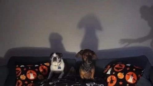 狗狗正在看鬼片时,主人却突然伸出一双手,接下来忍住别笑!