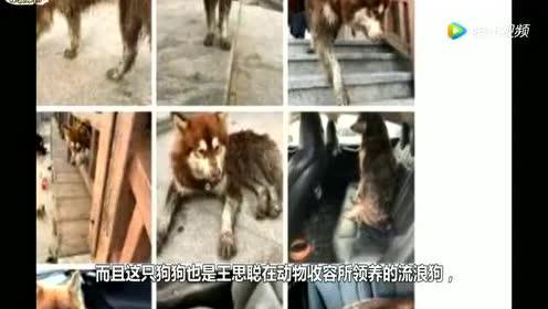 王思聪有多宠爱他的狗?上百万的豪车被狗弄脏!直接说车不要了