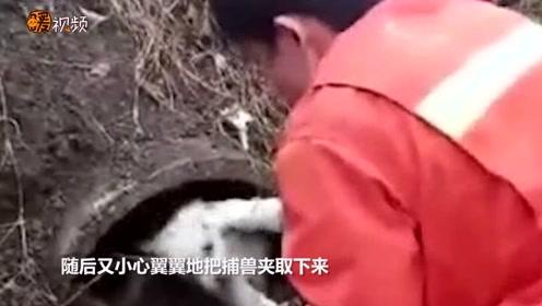 暖哭了!狗狗被救后拖着瘸腿追随消防车 久久不愿离去