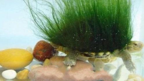 网友发现乌龟越养越不对劲,浑身长绿毛 专家看后称:你赚大了