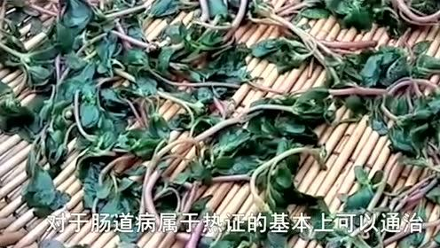 """这种野菜是白发的""""克星""""!农村随处可见,可惜人们都扔掉了!"""