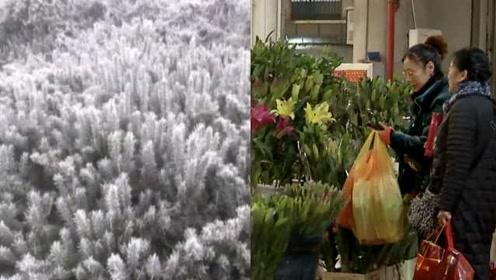 寒潮来袭!春城昆明降温,鲜花基地受冻,鲜切花量少价变高