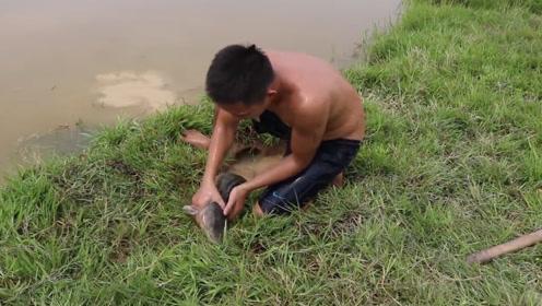 农村小伙在河边掏洞,不料收获两条大肥鱼,这下晚餐有着落了!