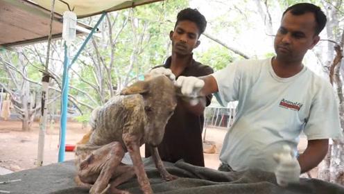 印度神秘场景:上千只流浪狗尸体摆满街头,原因令人唏嘘不已
