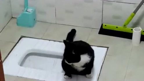 这猫咪从小就会上厕所,上完厕所还会自己埋几下,老祖宗祖传的手艺不能少