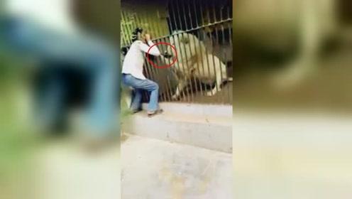 惊悚瞬间!饲养员投喂狮子手臂被拽住撕咬长达40秒