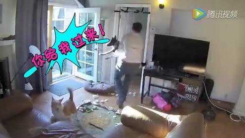 狗狗帮主人抓鸡啦 鸡飞狗跳的场面原来如此震撼!