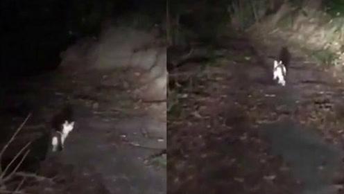 日本车友深夜山间迷路 猫咪引路成功解救