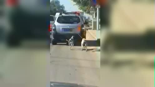实拍汽车拽拉着两只狗一路奔跑,看着就揪心!
