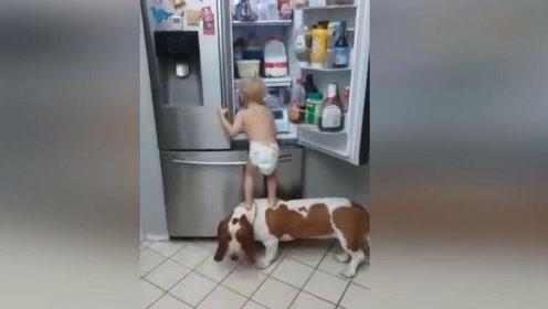 狗狗帮宝宝拿冰箱里面的东西吃,结果下一幕妈妈都忍不住笑了